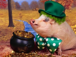 Animal Wallpaper - Nobility pig