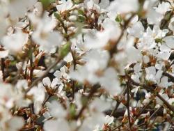 Flower Wallpaper - White flowers
