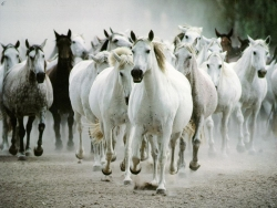 Animal Wallpaper - Horse herd