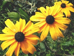 Flower Wallpaper - Little sunflower
