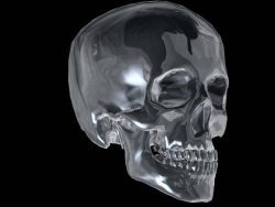 Art Wallpaper - Skull