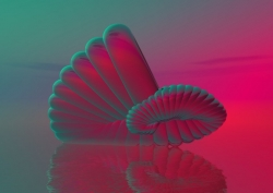 Art Wallpaper - Shell