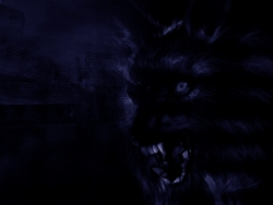 Animal Wallpaper - Black wolf