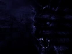 Animal Wallpaper - Black wolf