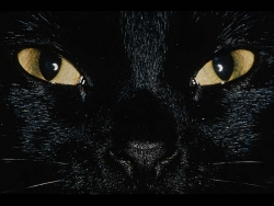 Animal Wallpaper - Cat's eyes