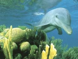 Animal Wallpaper - Lovely dolphin