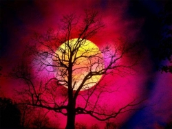 Nature Wallpaper - Sunset tree