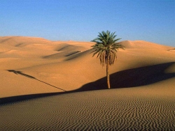 Landscape Wallpaper - Desert