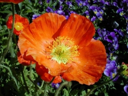 Flower Wallpaper - Orange flower