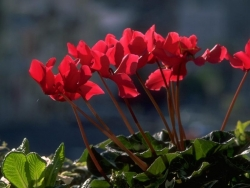 Flower Wallpaper - Little red flowers