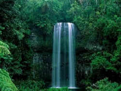 Nature Wallpaper - Green waterfall