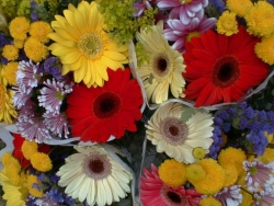 Flower Wallpaper - Colourful flowers