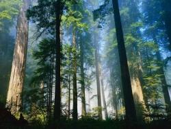 Landscape Wallpaper - Forest