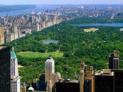 Landscape Wallpaper - Central Park NY