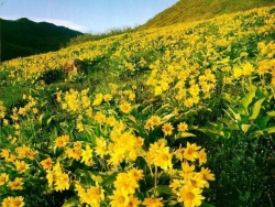 Flower Wallpaper - Wild flower valley