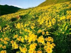 Flower Wallpaper - Wild flower valley