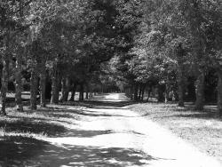 Landscape Wallpaper - Romantic road