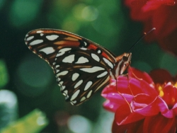 Animal Wallpaper - Colourful butterfly