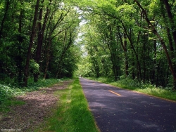 Landscape Wallpaper - Forest road