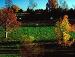 Landscape Wallpaper - Graze land