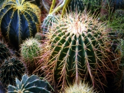 Flower Wallpaper - Catus garden