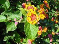 Flower Wallpaper - Small yellow flowers