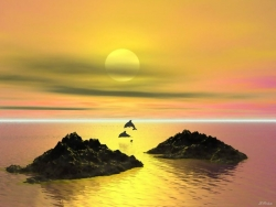 Landscape Wallpaper - Dolphins in sunset