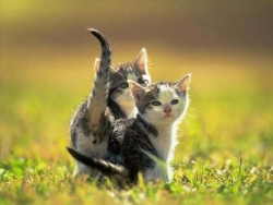 Animal Wallpaper - Lovely kittens