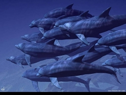 Animal Wallpaper - Group of dolphin