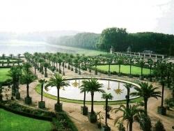 Landscape Wallpaper - Palm garden