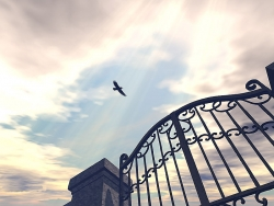 Landscape Wallpaper - Crow flies