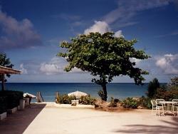 Landscape Wallpaper - Beach tree