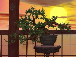 3D and Digital art Wallpaper - Bonsai