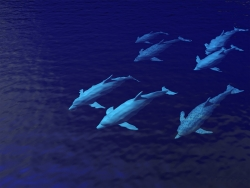 3D and Digital art Wallpaper - Dolphin pod