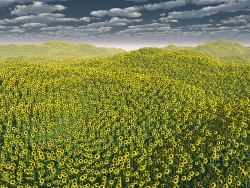3D and Digital art Wallpaper - Sunflower valley