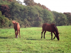 Animal Wallpaper - Horses & grass