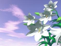 3D and Digital art Wallpaper - Lilies
