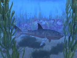 3D and Digital art Wallpaper - Blue shark