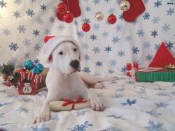 Animal Wallpaper - Gluckgulsch dog