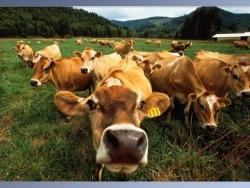 Animal Wallpaper - Animals farm