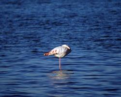 Animal Wallpaper - Flamingo
