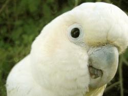 Animal Wallpaper - Papagal