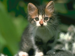 Animal Wallpaper - Katze cat