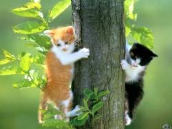 Animal Wallpaper - Hidden cats