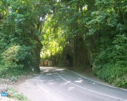 Landscape Wallpaper - Green road
