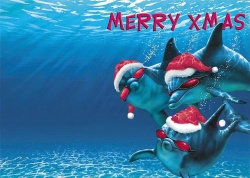 Christmas Wallpaper - Dolphin with Xmas