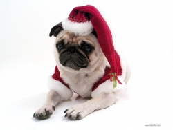 Christmas Wallpaper - Dog with xmas