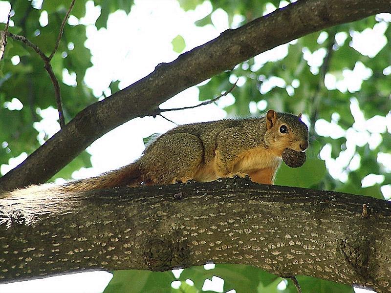 Squirrel climb