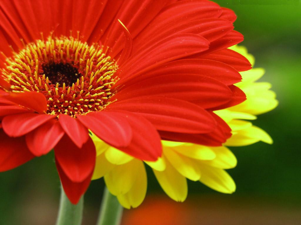 Blossom red flower