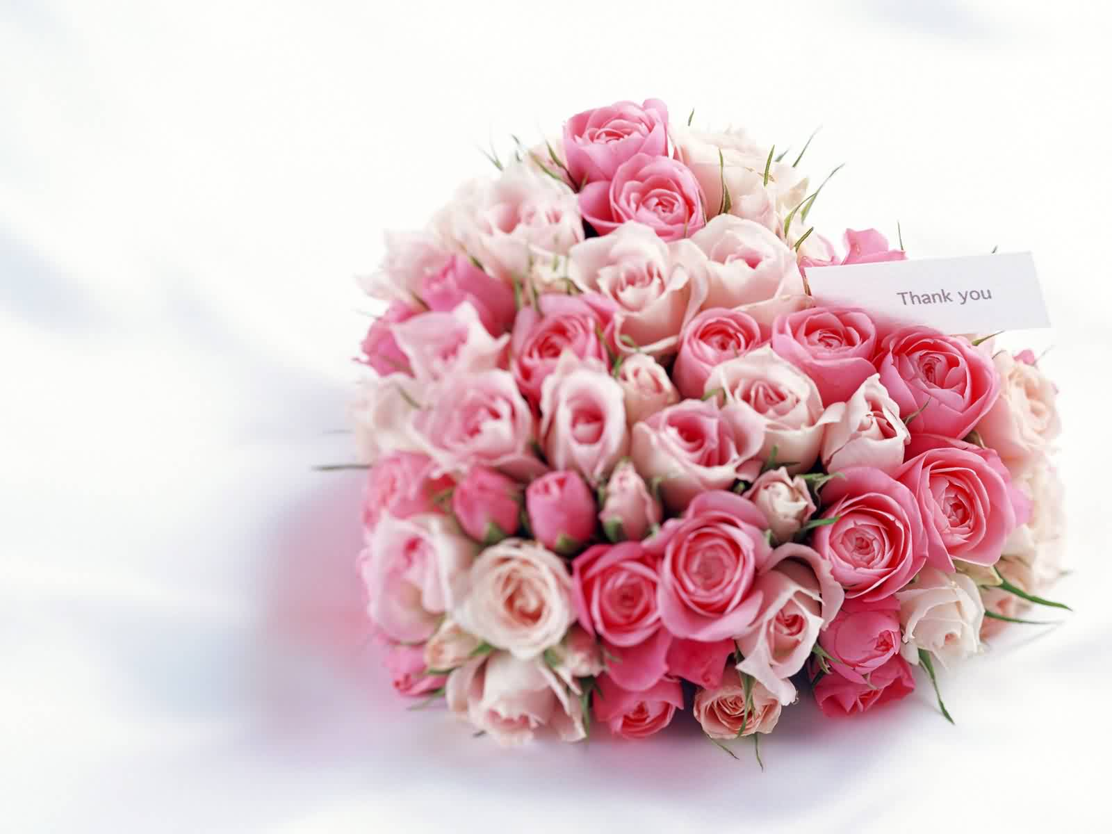 Love Roses 2